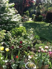 Summer Garden View 2