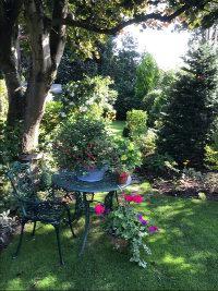 Summer Garden View 3
