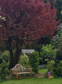 Summer Garden View 4